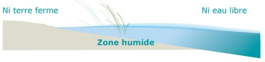 schema_zone_humide