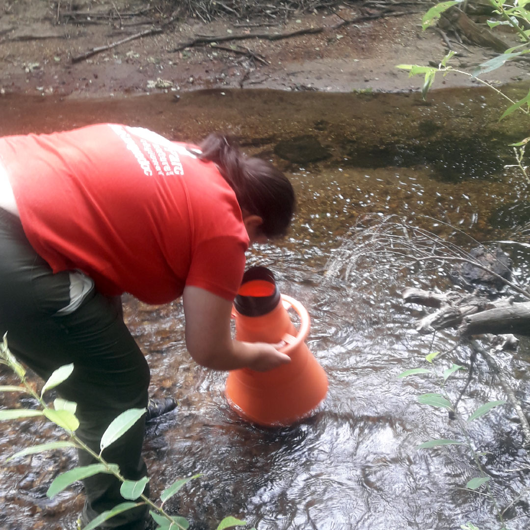 Technicienne qui recherche des moules d'eau douce